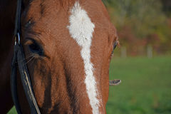 Horse on the farm. A domestic animal on the farm Stock Photo