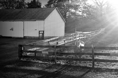 Horse Farm. Black and White photograph of a horse, barn and fence with the evening sun rays shining on the horse Stock Image