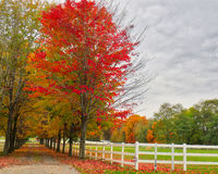 Horse Farm in the Fall 2. Fall colors on a Upstate New York horse farm Stock Image