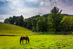 Horse in a farm field in rural York County, Pennsylvania. Royalty Free Stock Photos