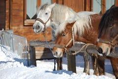 Horse on a farm Stock Image