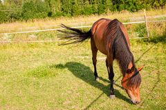 Horse on the farm Royalty Free Stock Images