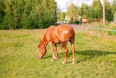 Horse on the farm Royalty Free Stock Photography