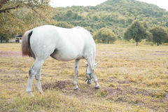 Horse farm. Horses in the field on Natural background Royalty Free Stock Photography