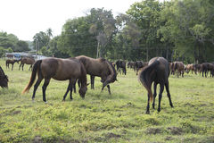 Horse farm. Horses in the field on Natural background Stock Images
