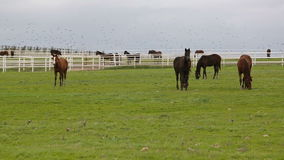 Horse Farm stock footage