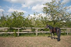Horse on the farm idillyc Royalty Free Stock Photo