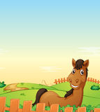 Horse in farm. Illustration of a horse in a farm Stock Images