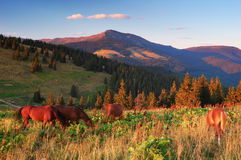 Horse Farm In The Mountains Royalty Free Stock Images