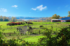 Horse farm land with red barns during fall. Royalty Free Stock Images