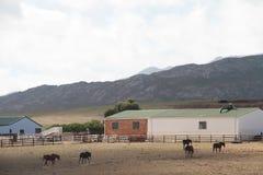 Horse Farm Landscape Royalty Free Stock Photography