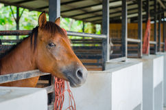 Horse in farm Royalty Free Stock Photos