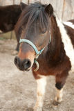 Horse on a farm. Looking down Royalty Free Stock Images