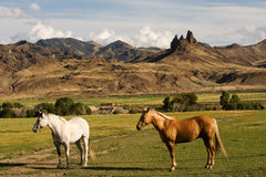 Horse farm with mountain landscape Royalty Free Stock Photos
