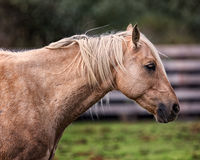 Horse at a Farm in Northern Californa. Color Image royalty free stock photo