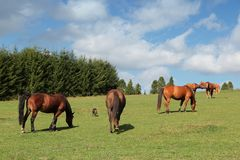 Horse farm in Poland Royalty Free Stock Photo
