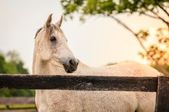 Horse of a farm royalty free stock images