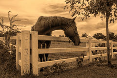 Horse on farm Stock Photos