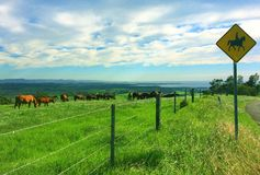 Horse farm royalty free stock photography
