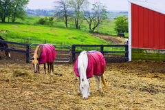 Horse farm in rural Wisconsin area Stock Photography