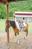 Horse in farm. Horse with saddle in farm Stock Photography