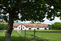 Horse farm in the shade of a tree. Breathe taking horse farm from shade of maple tree royalty free stock photography
