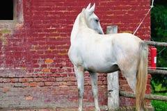 Horse on the farm Stock Photography