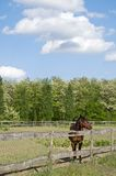 Horse on the farm with trees Royalty Free Stock Photos