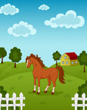Horse on farm Royalty Free Stock Image