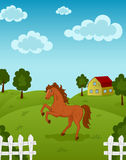 Horse on farm Stock Image