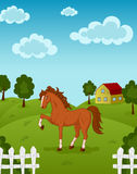 Horse on farm Royalty Free Stock Photos