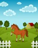 Horse on farm. Vector illustration of brown horse on a farm Royalty Free Stock Photos