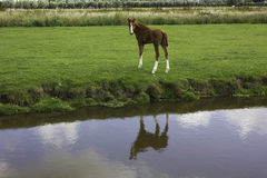 Horse  at farm. A view of a horse at farm Stock Photography