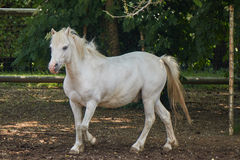 Horse in the farm. White horse in the farm Stock Image
