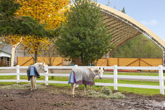 Horse farm with white fence and fall colorful leaves. Royalty Free Stock Images