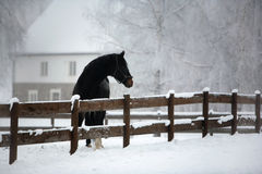 Horse Farm in Winter Royalty Free Stock Photography