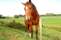 Horse at the farm Royalty Free Stock Photography