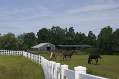 Horse farming Royalty Free Stock Photography
