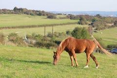 Horse in a farming countryside Royalty Free Stock Photos