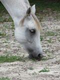 Horse, Fauna, Horse Like Mammal, Mane Stock Photos
