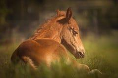 Horse, Fauna, Mane, Horse Like Mammal Royalty Free Stock Photography