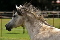 Horse, Fauna, Mane, Horse Like Mammal Stock Photos