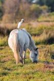 Horse, Fauna, Pasture, Crane Like Bird royalty free stock images