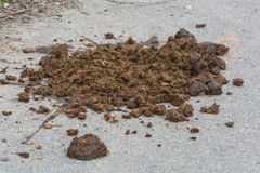 Horse Feces. Big horse droppings on an asphalt road Royalty Free Stock Photo