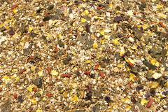Horse feed mix Stock Photography