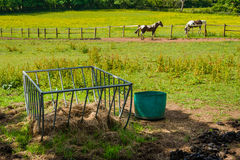 Horse feeder Stock Photography