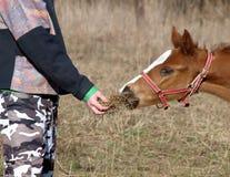 Horse feeding Royalty Free Stock Photos