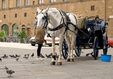 Horse feeding. Royalty Free Stock Images