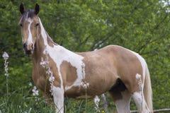 Horse feeding Royalty Free Stock Photo