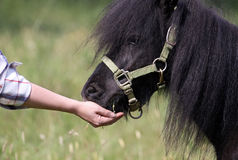 Horse feeding Royalty Free Stock Photography
